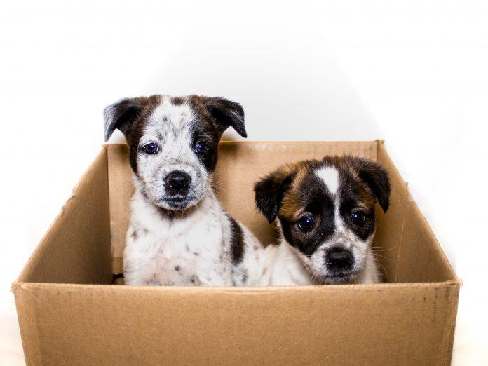 frozen puppies-3-14b813d5