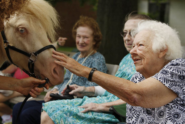 New Tucson Seniors Community Will Be Home To Horse Therapy