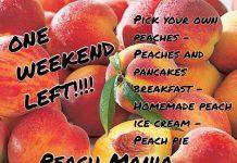 Peach Mania at Apple Annie's Orchard